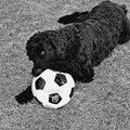 Soccer Hoodlum Royalty Free Stock Image