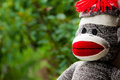 Sock monkey dreamy with tree background Royalty Free Stock Image