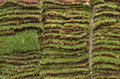 Sod Garden Grass Lawn Squares Royalty Free Stock Photo