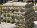 Sod turf grass rolls of at a nursery Royalty Free Stock Photos