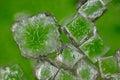 Sodium chloride crystals Royalty Free Stock Photo