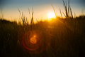 Soft backlight meadow grass during sunset with lens flare Stock Photo