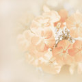 Soft blur background with flowers orange Stock Photos