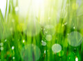 Soft blur grass background Royalty Free Stock Image