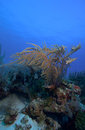 Soft Corals near Cayo Largo, Cuba Stock Images