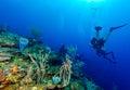 Soft corals near cayo largo cuba Royalty Free Stock Image