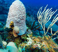 Soft corals near cayo largo cuba and hard Stock Photo