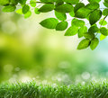 Soft defocused spring background with a sunburst and bokeh over lush green grass Royalty Free Stock Photo