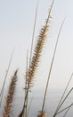 Soft dry grass blurred background with the sea a detail of some delicate against a portrait cut Royalty Free Stock Images