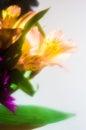 Soft focus boquet daisy lilly Stock Image