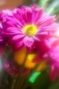 Soft focus boquet daisy rose Royalty Free Stock Photos