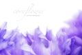 https---www.dreamstime.com-stock-photo-soft-focus-cornflower-background-copy-space-made-lens-soft-focus-cornflower-background-copy-space-made-lens-image104937158