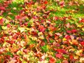 Colorful fall leaf background