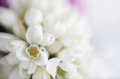 Soft focus flower background made with lens bab copy space baby and macro Royalty Free Stock Photos