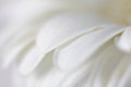Soft focus flower background made with lens bab copy space baby and macro Royalty Free Stock Images