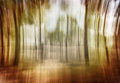 Soft focus photo of forest dark abstract natural background blurred grunge image scary woodland mystery nature Royalty Free Stock Images