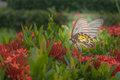 Soft focus to be diluted dream a butterfly and flowers in garden Royalty Free Stock Images