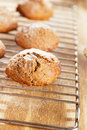 Soft ginger cookies cooling Royalty Free Stock Images