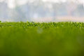 Soft green and blue background of grass Royalty Free Stock Image