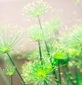 Soft Green Nature Abstract Bac...