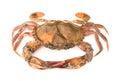 Soft shell crab Royalty Free Stock Photo