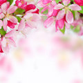 Měkký jaro jablko květiny