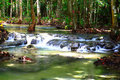 Soft water fall in forest Stock Image