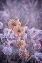 Softness flower fluffy flower in meadow Royalty Free Stock Image