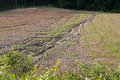 Soil erosion on a cultivated field after heavy shower Royalty Free Stock Photo