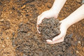 Soil handful female hands humus Royalty Free Stock Image