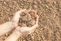 Soil handful female hands humus Stock Photos