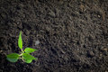 Soil And Plant Background