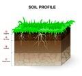 Soil Profile Royalty Free Stock Photo