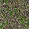 Soil sprouted grass seamless tileable texture Royalty Free Stock Photos