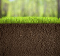 Soil under grass in forest underworld Stock Photos