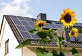 Solar cells on a roof with sun flowers Stock Image