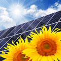 Solar energy panel and sunflowers. Royalty Free Stock Photo