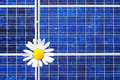 Solar panel with marguerite Royalty Free Stock Photography