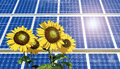 Solar panel and sunflowers Royalty Free Stock Photo