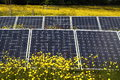 Solar panels in field photograph of a of buttercups Royalty Free Stock Photography