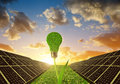 Solar panels with lightbulb on plant Royalty Free Stock Photo