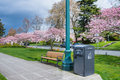 Solar trash compactor in urban park residential with bench and cherry trees bloom copy space Royalty Free Stock Photo
