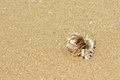 Soldier crab the on sandy beach Stock Photo