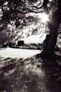 Sole di Autum del giardino Immagine Stock Libera da Diritti