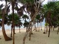 Soliman bay beach scenery with lots of palm trees at in mexico Royalty Free Stock Image