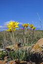 Solitary desert wildflowers Stock Photos