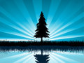 Solitary fir tree Royalty Free Stock Photos