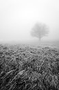 Solitary and lonley tree in black and white with fog Royalty Free Stock Photos