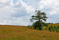 Solitary oak tree landscape with a on a hill and some bushes Stock Photography