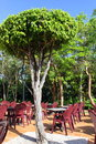 Solitary tree amongst seating area Stock Images